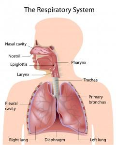 child breathing